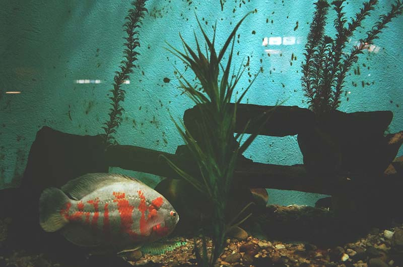 They have a Shark Reef Marine Reserve located off the coast of the island of Beqa.